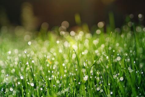 grass-3345960_1280